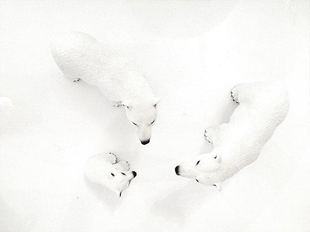To isbjørne og deres unge og en masse sne set fra oven.