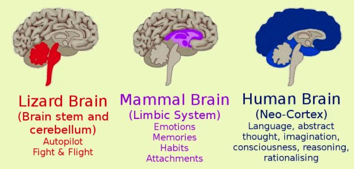 hjerte krybdyr limbiske system neo cortex